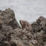 Ein Fels, der der täuschend echt aussieht wie eine Robbe