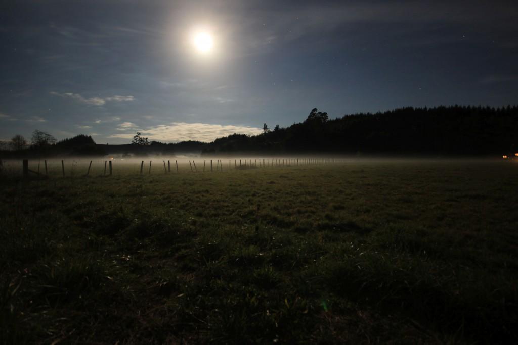 Hier ein Feld auf dem Weg zu dem Örtchen, wo ich jetzt bin. wieder mal Mondschein.