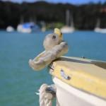 Da war ne Ente aufm Boot. Schräg.