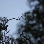 Finde den Vogel.