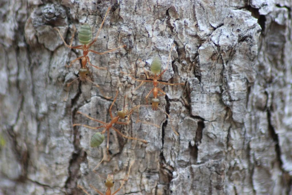 """(Grad im Internet gefunden:) Die Ameise wird von einem Kuhfladen getroffen und braucht zwei Stunden, sich herauszuarbeiten.  """"Verdammte Scheiße"""", flucht sie, """"Genau auf's Auge!"""""""