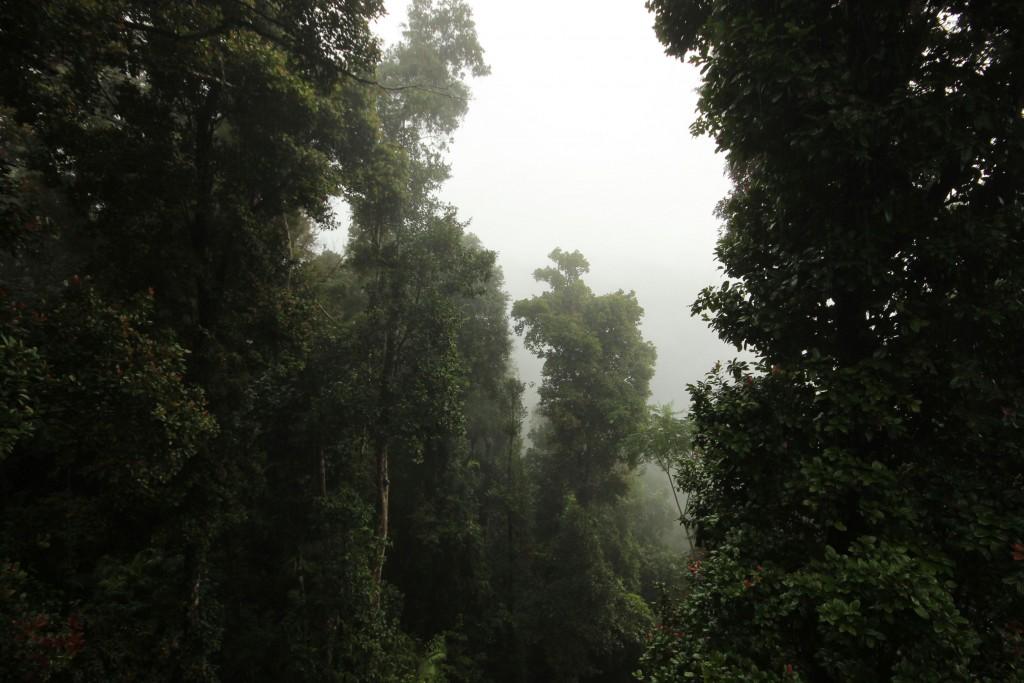 Es folgen ein paar Regenwaldbilder.