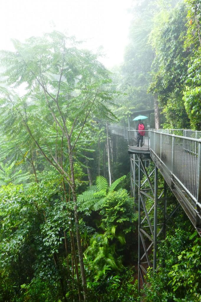 Ein Regenwaldsteg.