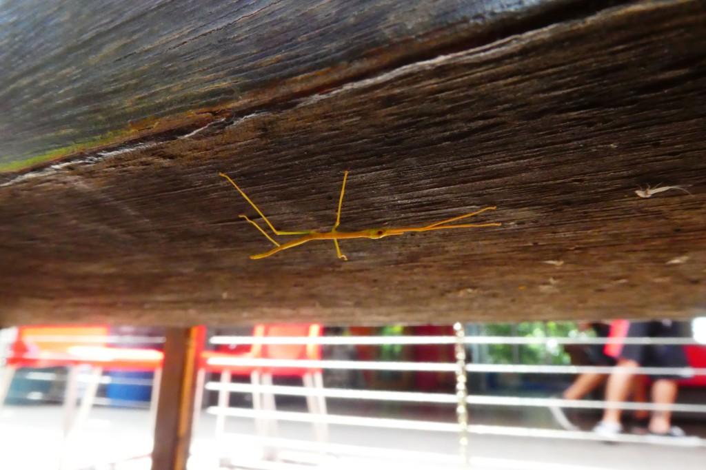 Ein lustiges Insekt.
