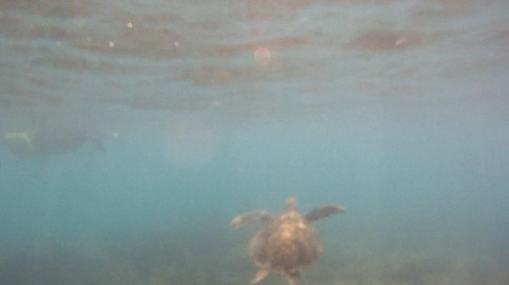 Der Beweis. Ich schwamm mit dem Dude.