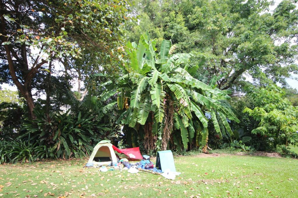 Ein Zelt vor einem Bananenbaum.
