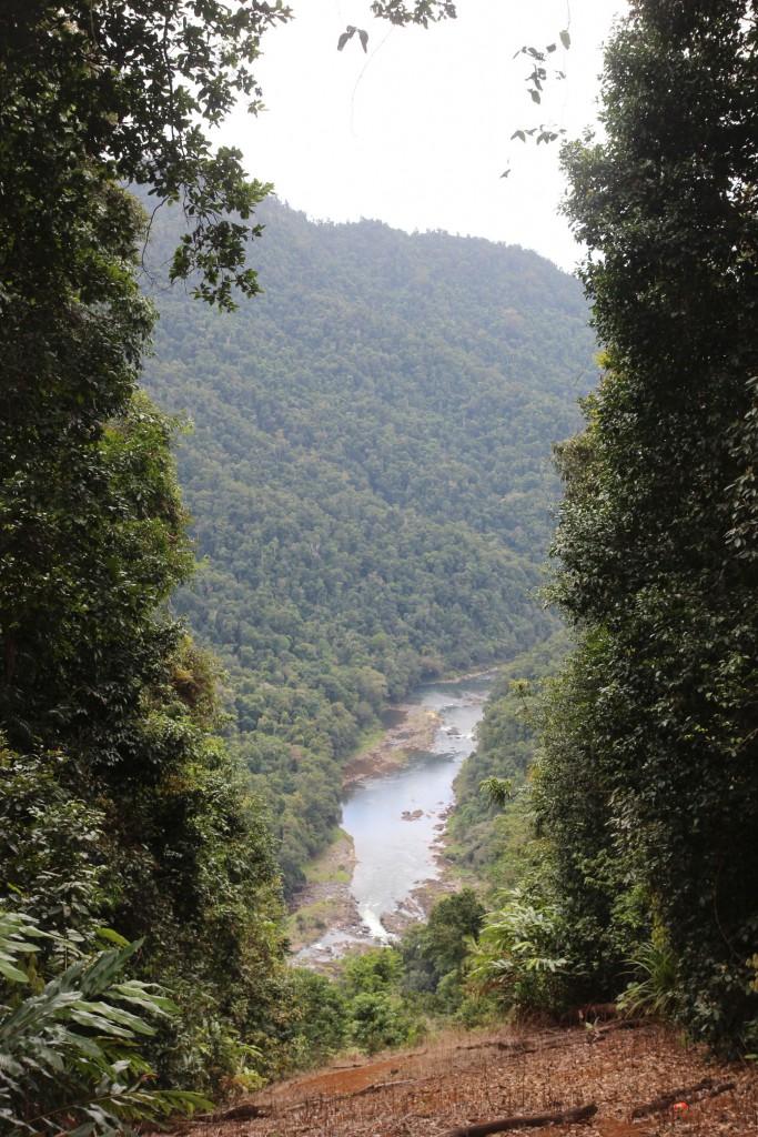 Ein Fluss im Regenwald. Wir wanderten dort hin.