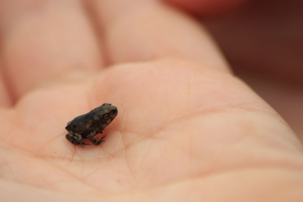 Entweder diese Hand ist groß oder der Frosch ist klein.