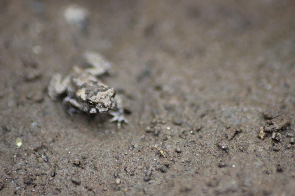 Noch ein Frosch.