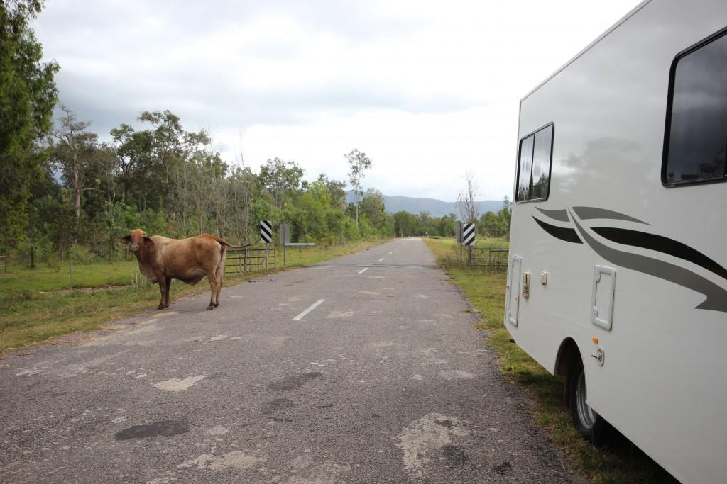 Da steht ne Kuh.
